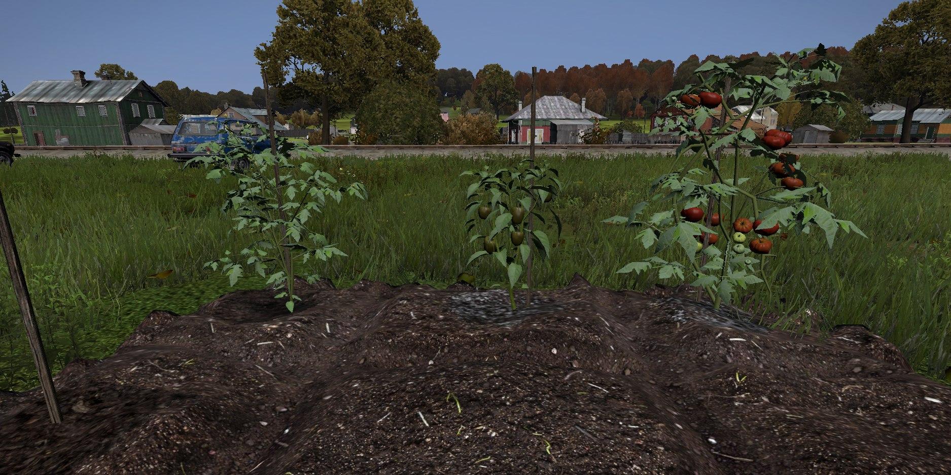 Dayz: Фермерство